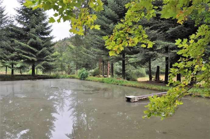 Romantische Fischteiche am Fuße der Wiligartaburg im Biosphärenreservat * Rinnthal/Wilgartswiesen