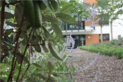 Bepflanzung Dachgarten