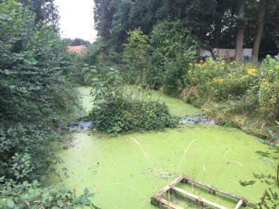 Das Biotop vielleicht bald ein Schwimmteich?