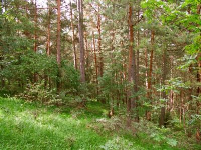 Waldfläche in Hanglage