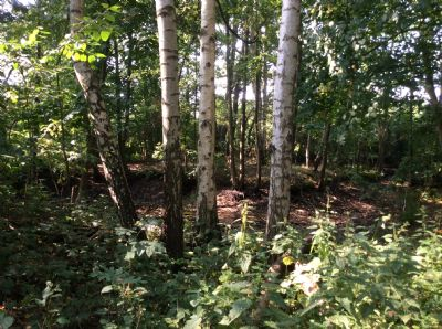 Bild 12 Wald