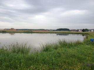Forchheim Bauernhöfe, Landwirtschaft, Forchheim Forstwirtschaft