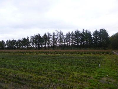 Tingleff Bauernhöfe, Landwirtschaft, Tingleff Forstwirtschaft