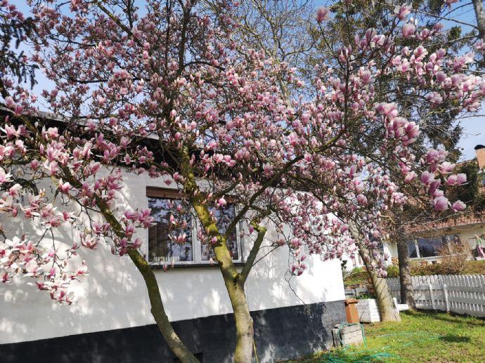 Toller Bungalow mit Garten und Garage in Sprendlingen