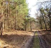 Nuthe-Urstromtal Bauernhöfe, Landwirtschaft, Nuthe-Urstromtal Forstwirtschaft