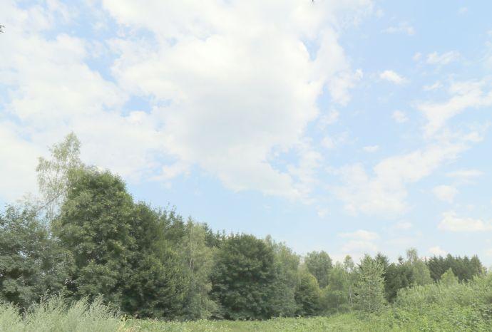 4.595 m² Waldfläche