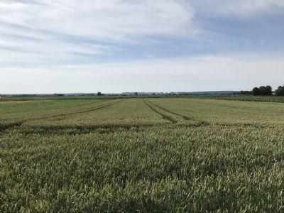 Ehekirchen Bauernhöfe, Landwirtschaft, Ehekirchen Forstwirtschaft