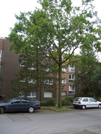 Helles Appartement mit großem Balkon - Wohnberechtigungsschein erforderlich