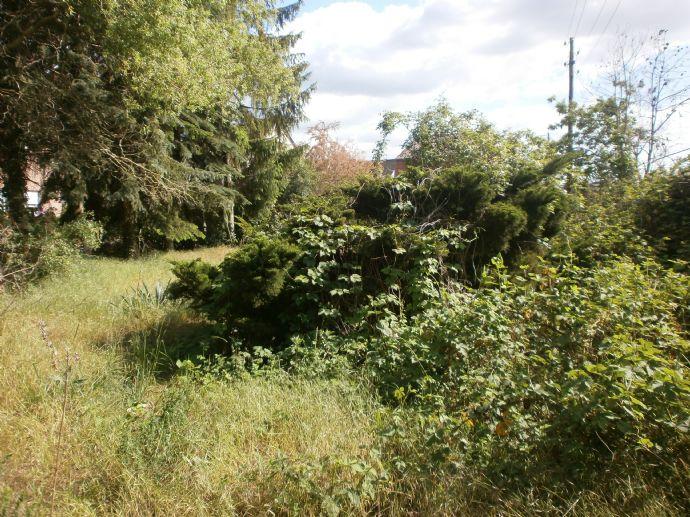 Grundstück in Dessau-Mosigkau !