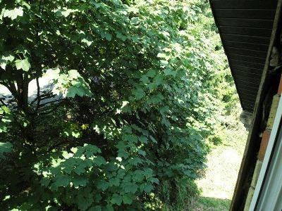 3 Blick vom Dachgeschoss 003