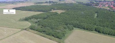 Hinte Bauernhöfe, Landwirtschaft, Hinte Forstwirtschaft