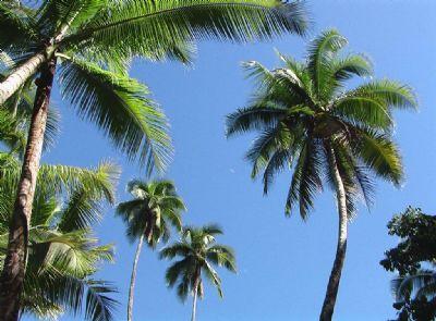 Provincia de Puntarenas Grundstücke, Provincia de Puntarenas Grundstück kaufen