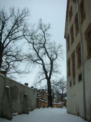 Blick Richtung Schloßgarten