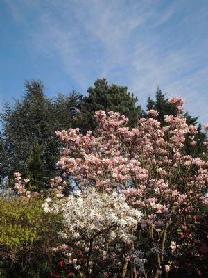 und auf die Blütenpracht im Garten !