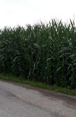 Wolferstadt Bauernhöfe, Landwirtschaft, Wolferstadt Forstwirtschaft