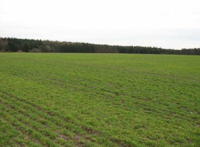 Seinsfeld Bauernhöfe, Landwirtschaft, Seinsfeld Forstwirtschaft