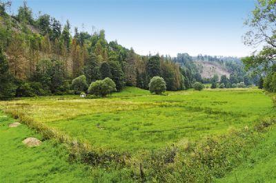Sonneberg Bauernhöfe, Landwirtschaft, Sonneberg Forstwirtschaft