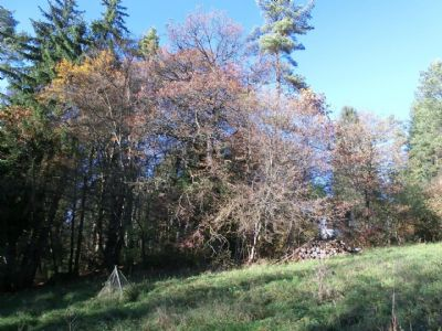 Trochtelfingen Grundstücke, Trochtelfingen Grundstück kaufen
