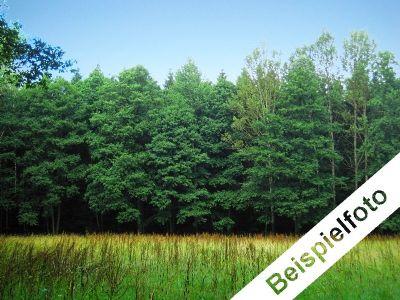 3 Waldgrundstücke bei Radibor