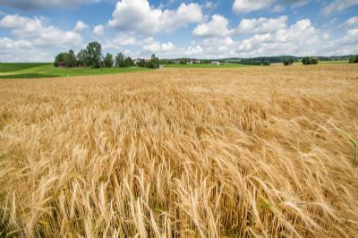 Plößberg Bauernhöfe, Landwirtschaft, Plößberg Forstwirtschaft