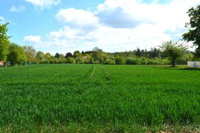 Kößlarn Bauernhöfe, Landwirtschaft, Kößlarn Forstwirtschaft