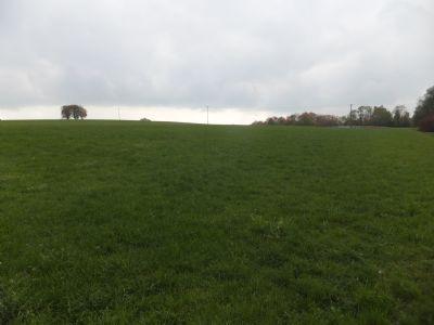 Oberhausen Bauernhöfe, Landwirtschaft, Oberhausen Forstwirtschaft
