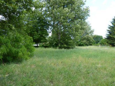 Grundstück mit Bäumen und Büschen