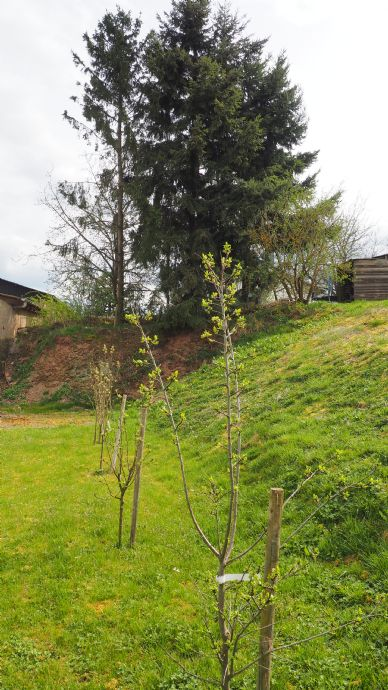 Neue Bepflanzung im Garten