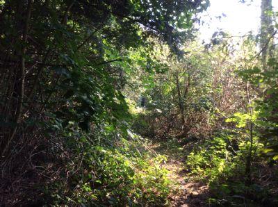 Bild 5 Weg in den Wald hinein