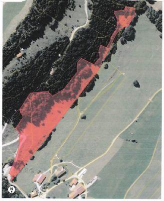 Rettenberg Bauernhöfe, Landwirtschaft, Rettenberg Forstwirtschaft
