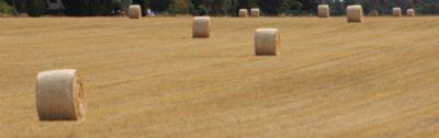 Buzau  Bauernhöfe, Landwirtschaft, Buzau  Forstwirtschaft