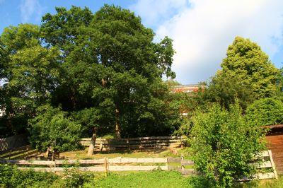 Tolles, unverbaubares Baugrundstück in Schlangenbad (Wambach-Nord) bis 2. August provisionsfrei