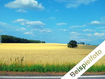 Verpachtete Landwirtschaftsflächen bei Wernigerode