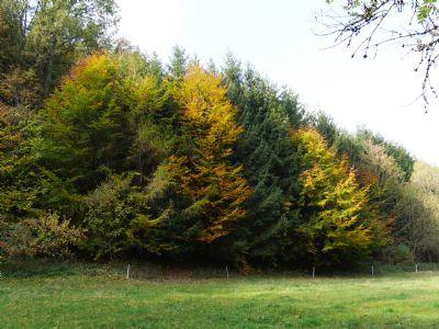 Pommelsbrunn Bauernhöfe, Landwirtschaft, Pommelsbrunn Forstwirtschaft