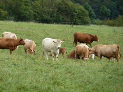 Coburg Bauernhöfe, Landwirtschaft, Coburg Forstwirtschaft