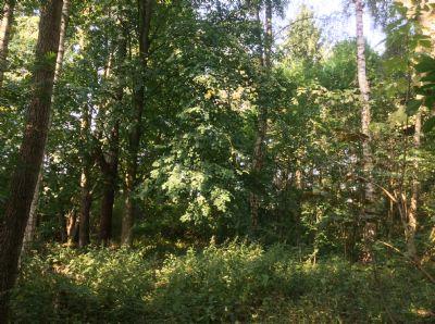 Bild 11 Waldlichtung