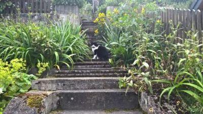 Aufgang zum Garten