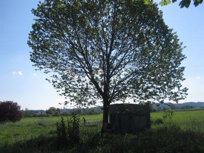 Baumbestand bei Feldstadel