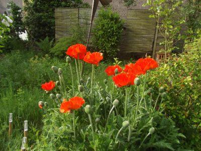 so sieht es jetzt im Garten aus