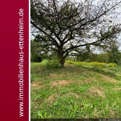 Ettenheim Bauernhöfe, Landwirtschaft, Ettenheim Forstwirtschaft