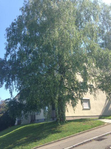 4 Zimmerwohnung in Eningen zur Kapitalanlage