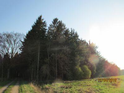 Hartenholm Bauernhöfe, Landwirtschaft, Hartenholm Forstwirtschaft